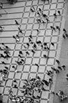 Yuri Evangelista - Street photography - The Ants